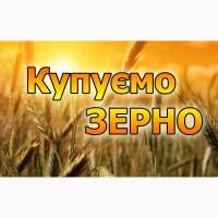 Куплю пшеницю з повишеною смітною по Хмельницькій області