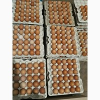 Яйцо куриное опт розница Днепр