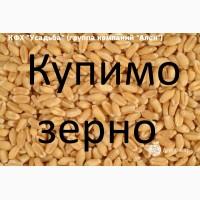 Закуповуємо пшеницю 2 кл, 3 кл, фураж, відповідно до Держстандарту
