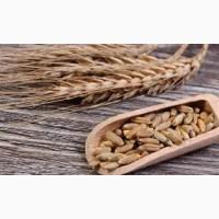Продам жито 300т