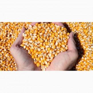 Закупаем зерновые культуры: - сорго - соя - пшеница 2 и 3 класса - рапс