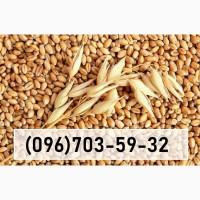ЗАКУПАЕМ Оптом: зерновые, масличные, бобовые по Центральной Украине