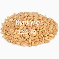 Куплю з місця пшеницю 6 клас