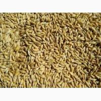 Компанія закупляє на постійній основі зернові культури