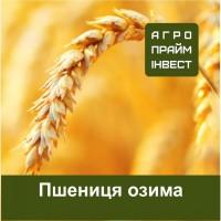 Пшениця озима сертифікована