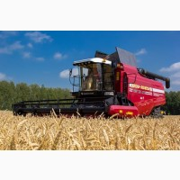 Збирання зернових. Послуги комбайнів