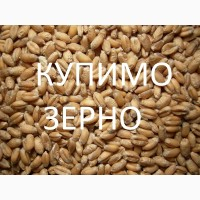 Компанія постійно закуповує пшеницю 2кл-3