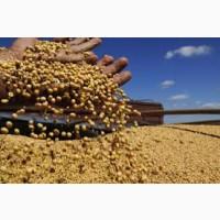 Вся Україна. Закупівля сої ГМО без ГМО