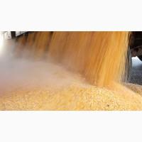 Кукуруза - прямые ЖД поставки в Китай
