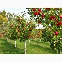 Травосуміш для озеленення садових участків