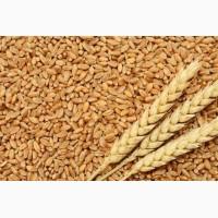 Куплю зерновые культуры