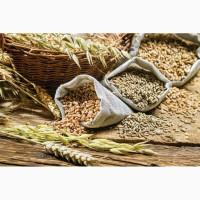 Куплю пшеницю 1, 2 клас