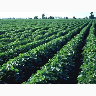 Купим сою Без ГМО по всей Украине
