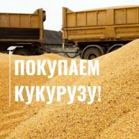 Покупаем кукурузу по хорошей цене