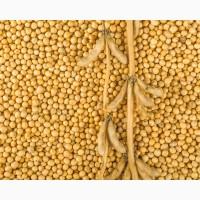 Покупаю сою и кукурузу от 25 т по Черниговской обл