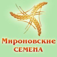 Семена озимой пшеницы сорт КОЛОНИЯ; Скаген, 1 репродукция