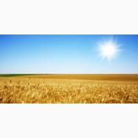 Послуги перевезення зернових. Перевезення зерна