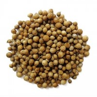 Семена кориандра опт сорт Пуэбло