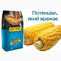 Насіння кукурудзи ДКС 4590 ФАО 360 ціна за мішок