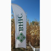 Скидка до 10% на семена кукурузы ВНИС от производителя