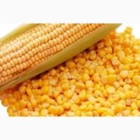 Продам 20 тонн зерна кукурузы. Влага 13, 6. Сор в норме. Находимся в городе Александрия