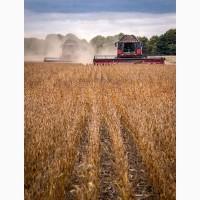 Купляємо зернові