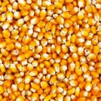 Закупаем кукурузу битую, отходы кукурузы
