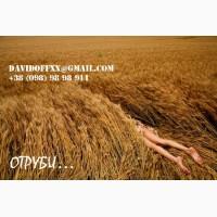 Продаем пшеничные отруби собственного производства