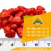 Семена кукурузы / Насіння кукурудзи Дніпровський 181 СВ від ПБФ «Колос»