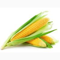Кукурузу куплю, дорого