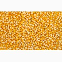 Пшениця ячмінь кукурудза соя тритікал