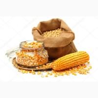 Продам семена гибридов кукурузы
