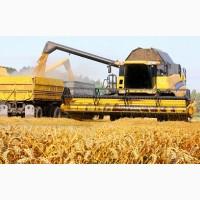Перевезення зерна по Україні. Послуги зерновозів