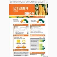 Кукуруза ЕС ГЕЛЛЕРІ ФАО 340