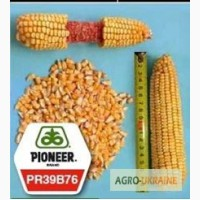 Кукуруза Пионер ПР39Б76