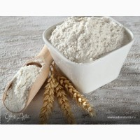 Wheat flour premium grade export