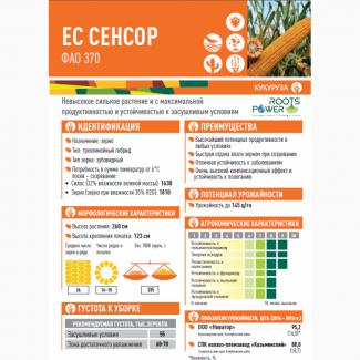 Кукуруза ЕС СЕНСОР ФАО 370