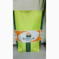 Соняшник насіння Євраліс Белла. Високоврожайний гібрид соняшника