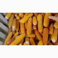 Підприемство закуповуе кукурудзу з усіх областей України! Купуємо дорого