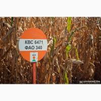Кукуруза КВС 6471 ФАО 340