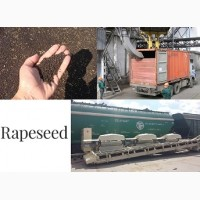 РАПС - прямые ЖД поставки в Китай