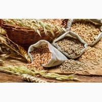 Куплю пшеницю фуражну. Полтава і область