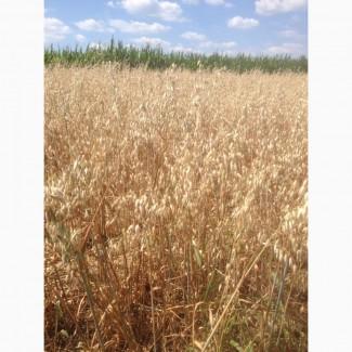 Закуповуємо висівки пшеничні по всій Україні