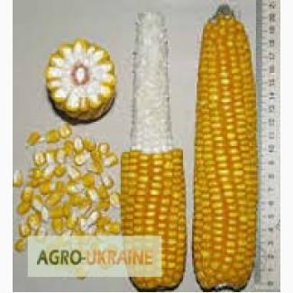 Кукуруза Пионер П9000