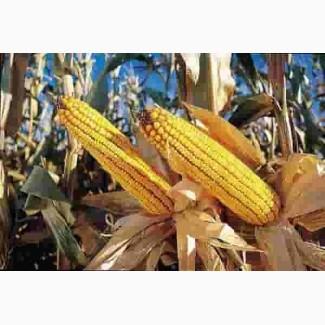 Кукуруза MAS 47.P/МАС 47.П ФАО 400