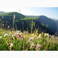 Семена кормовых трав: тимофеевка, овсянница, ежа, фацелия, райграс
