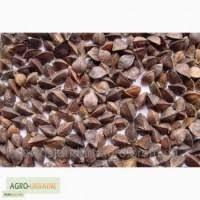 Продам насіння гречки, сорт Гранбі( Канада), Дніпропетровська обл Кривой рог