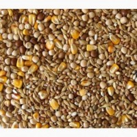 Закупаем некондицию, зерноотходы, зерновые и бобовые культуры