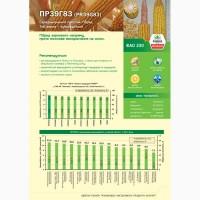 Кукуруза ПР39Г83/PR39G83 ФАО 230