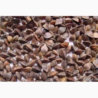 Куплю зерно гречки, ячменю, кукурудзи, гороху, пшениці ДОРОГО